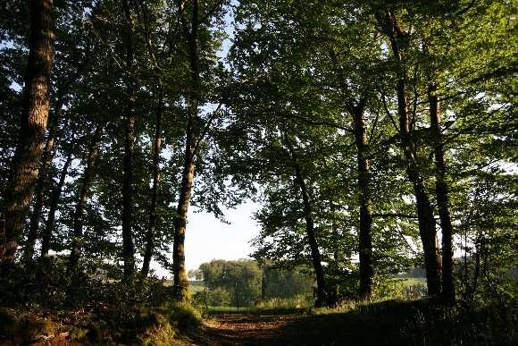 Bordure de forêt
