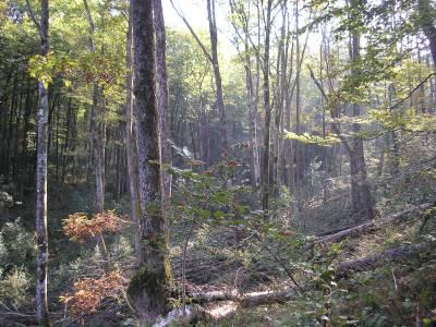 Coupe de jardinage: forêt en cours d'exploitation