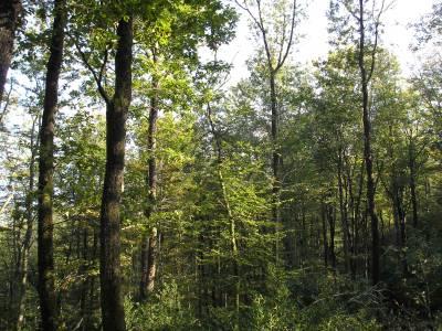 Coupe de jardinage : forêt pas exploitée