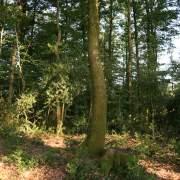 Coupe de jardinage pour gérer nos forêts