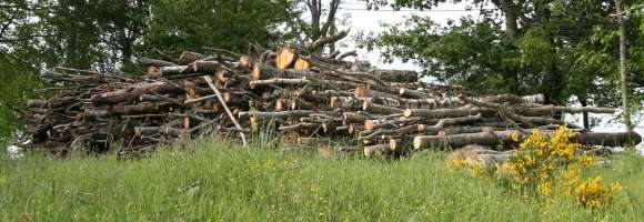Tas de bois stocké en plein air