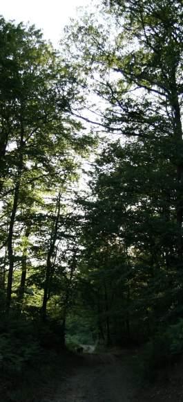 Vue de la forêt et de Billy
